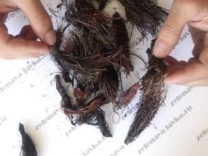 высушенные корни красной щетки