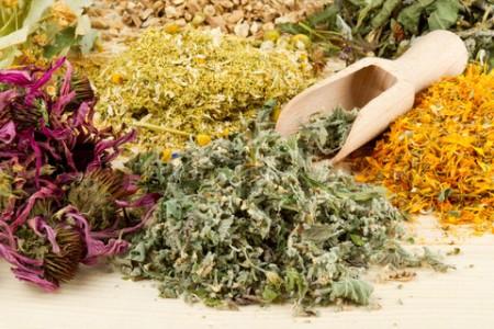 целебные травы народной медицины